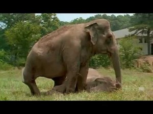 After 20 Years Apart These Elephants Reunite