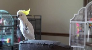 How This Bird Reacts To Michael Jackson's Music Will Leave You In Awe