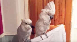 They Start Playing Elvis, Bird's Reaction Is Adorable