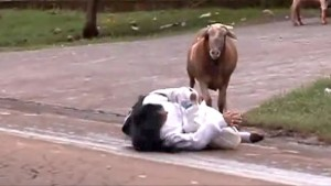 Crazy Goat Attacks People And It's Hilarious