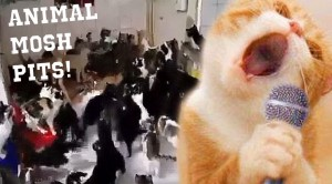 10 Animals Open Up Mosh Pits, And It's Amazing