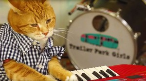 """Adorable Keyboard Kitty Jams To """"96 Tears"""", And We Can't Stop Laughing"""
