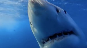 He Dropped This In The Water, But The Sharks' Reactions Are Terrifying