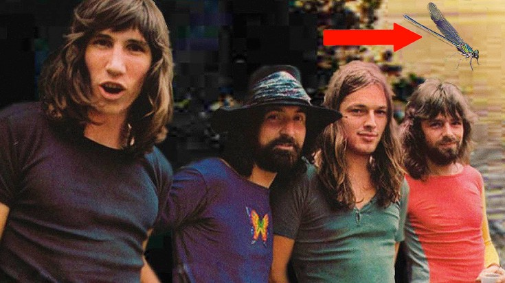 1 BIZARRE Fact Not Even Hardcore Pink Floyd Fans Will Know | Society Of Rock Videos