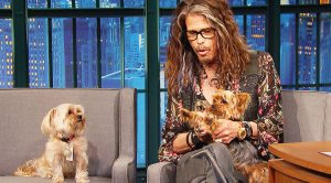 Steven Tyler's Dogs Unexpectedly Crash His Interview And Steal The Show—This Is Hilarious!