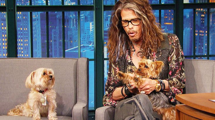 Steven Tyler's Dogs Unexpectedly Crash His Interview And Steal The Show—This Is Hilarious! | Society Of Rock Videos