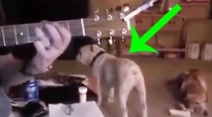 Keep Your Eye On This Dog When His Owner Starts Playing Rock Music!