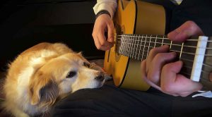"""There's Nothing Cuter Than This Guy Playing """"Space Oddity"""" For His Dog, I Promise You"""