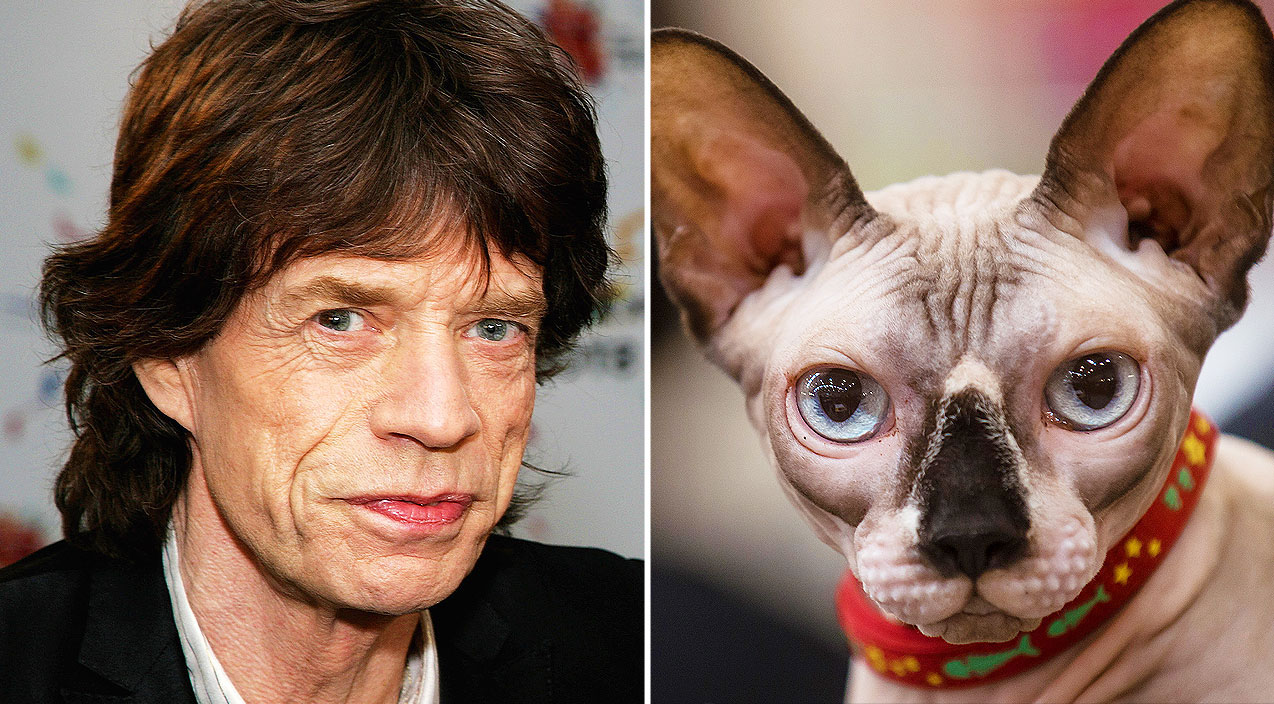 Cat That Looks Like Gene Simmons