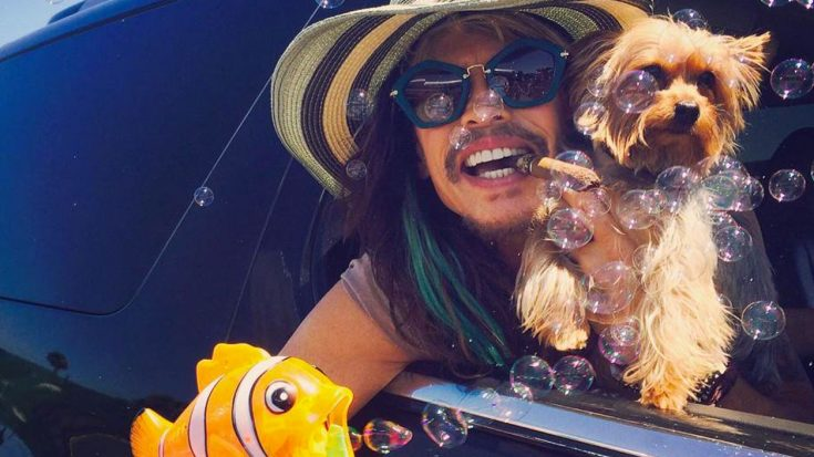 Steven Tyler Hangs Out With Adorable Puppies – How Precious Is This?! (MORE PHOTOS) | Society Of Rock Videos