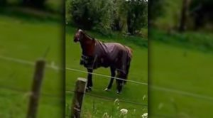 If You Can Watch This Horse's Reaction To Heavy Metal And Not Laugh Yourself Stupid, You're Made Of Stone