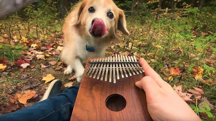 "This Guy Plays ""Can't Help Falling In Love"" On A Kalimba To His Dog And It's Too Cute To Handle! 
