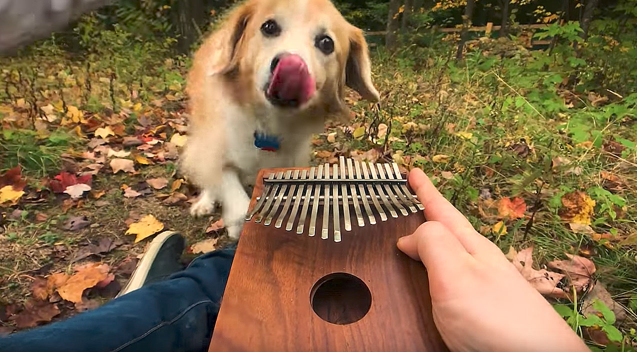 This Guy Plays Can T Help Falling In Love On A Kalimba