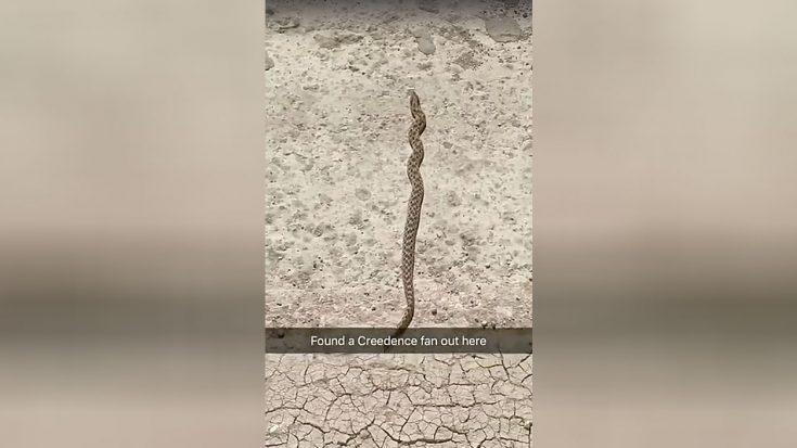 This Snake Is Going Viral For What Is Does When It Hears Creedence Clearwater Revival