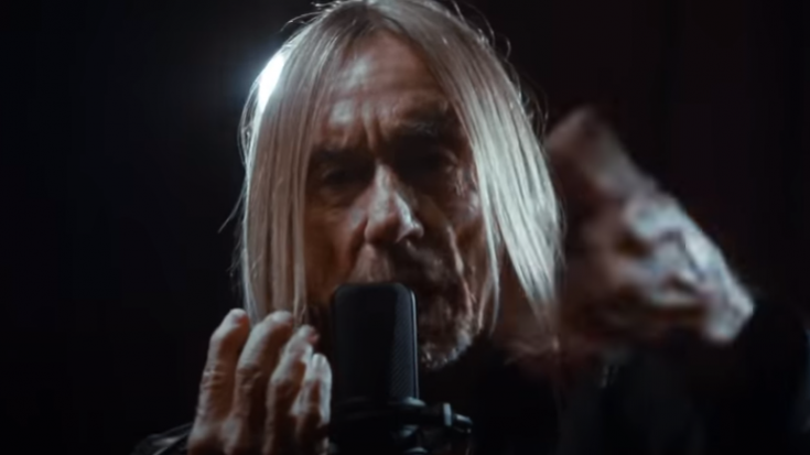 Iggy Pop Fights For Big Cat Species