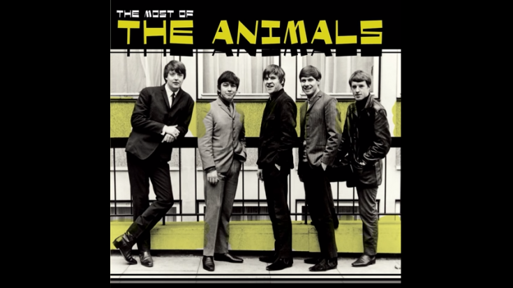 5 Career-Defining Songs Of The Animals | Society Of Rock Videos