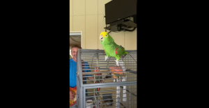 Watch A Parrot Sing Led Zeppelin, Van Halen And More