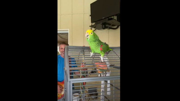 Watch A Parrot Sing Led Zeppelin, Van Halen And More | Society Of Rock Videos