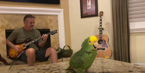 Watch A Parrot Sing 'Whole Lotta Rosie' By AC/DC