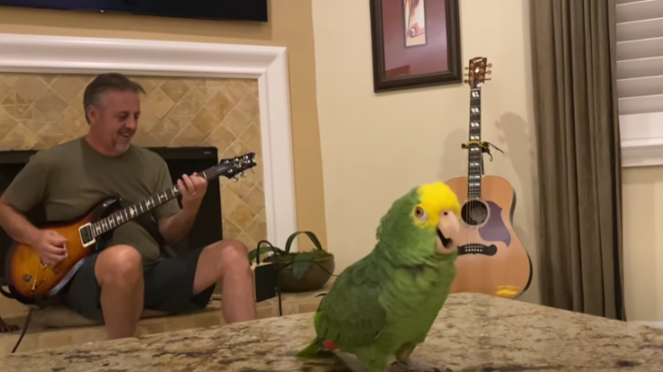 Watch A Parrot Sing 'Whole Lotta Rosie' By AC/DC | Society Of Rock Videos