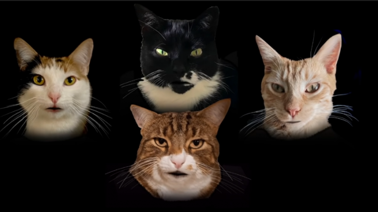 """Watch A Bunch Of Cats Adorably Sing """"Bohemian Catsody""""   Society Of Rock Videos"""
